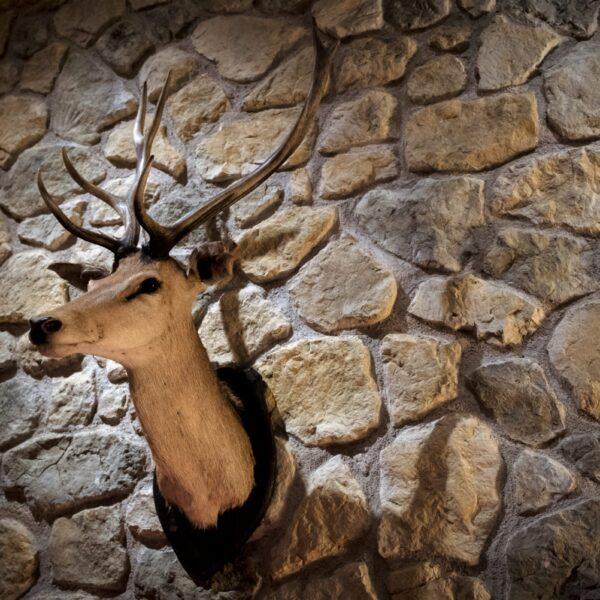 Steenstrip muur met hertengewei. Uitvoering: Opitek.